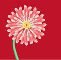Pink Flower Is Aster Against Red Background Stock Photo - 23470440