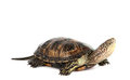 Turtle Isolated Stock Images - 23485424
