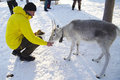 Feeding A Young Reindeer Royalty Free Stock Photos - 23488088