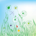Dandelion And Grass Field Stock Photos - 23495473