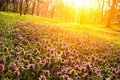 Flowers In Morning Light Royalty Free Stock Images - 23499149