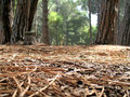 View From The Forest Floor Royalty Free Stock Image - 2359646