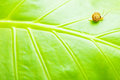 Green Leaf Natural Background Stock Photo - 23501060