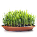Grass Royalty Free Stock Image - 23504166