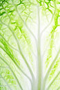 Leaf Of Salad Stock Photography - 23519192