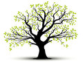 Vector Decorative Tree And Green Leaves Royalty Free Stock Image - 23529476