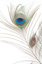 Detail Of Peacock Feather Eye Royalty Free Stock Image - 23546736