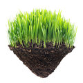 Grass And Turf Stock Images - 23563034