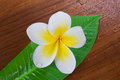 Frangipani Spa Flower Royalty Free Stock Photo - 23564865