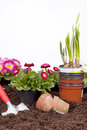 Gardening- Planting Flowers Stock Photography - 23584462