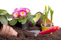 Planting Spring Flowers Stock Images - 23584764