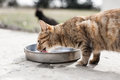 Lunch Of My Cat Royalty Free Stock Photography - 23591767
