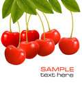 Bunch Of Fresh, Juicy, Ripe Cherries. Stock Photos - 23595083