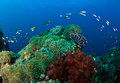 Coral Reef Royalty Free Stock Photos - 23596228