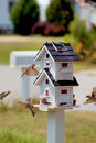 Bird Feeder Royalty Free Stock Photos - 2363938