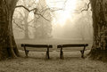 Benches In A Foggy Wood Royalty Free Stock Images - 23641779