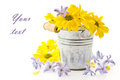Flowers Yellow Chrysanthemums And Blue Hyacinth Royalty Free Stock Images - 23644419