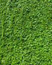 Green Leaves Top View Nature Background Stock Photos - 23649983