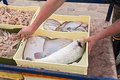 Crates Of Freshly Caught Fish Stock Image - 23681951