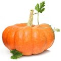 Pumpkin Isolated Stock Images - 23685984