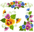 Pansy Stock Image - 23692621