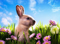 Art Baby Easter Bunny On Spring Green Grass Stock Photography - 23701652
