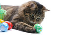 Cat And Easter Eggs Royalty Free Stock Images - 23725539