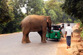 Wild Elephant S Attack Stock Images - 23746414