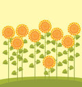 Sunflower Garden Royalty Free Stock Photography - 23747157