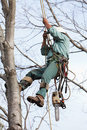 Worker Being Hoisted Up Into A Tree Stock Photography - 23753042