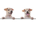 Two Dogs Royalty Free Stock Photo - 23758145