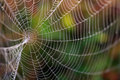 Spider Web Stock Photos - 23784933