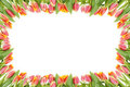 Tulip Flowers Frame Over The White Royalty Free Stock Photo - 23787675