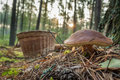 Closeup Big Mushroom And Basket In Forest Royalty Free Stock Photos - 23797038