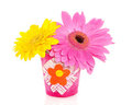 Gerber Flowers In A Little Vase Royalty Free Stock Photo - 23811545