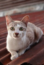 Baby Cat On The Roof Stock Image - 23837051