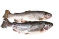 Raw Trout Fishes Royalty Free Stock Photos - 23881728