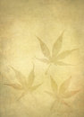 Background Japanese Maple Leafs Royalty Free Stock Images - 23887329