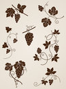 Grape Vine Design Elements Stock Image - 23899791