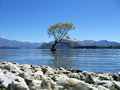 Tree In A Lake Royalty Free Stock Photos - 23913478