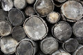 Drying Firewood Royalty Free Stock Images - 23929609
