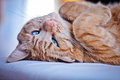 Sleepy Cat Royalty Free Stock Image - 23940146