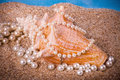 Exotic Shell And Pearls On Sand Stock Photos - 23955603