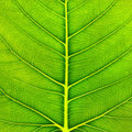 Green Leaf Macro Royalty Free Stock Images - 23958599