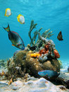 Water Surface And Marine Life Stock Photo - 23974180