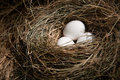 Easter Eggs In Nest Royalty Free Stock Photos - 23976028