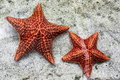 Starfish Royalty Free Stock Photos - 23980798