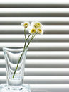 A Glass With A Sprig Of Wild Flowers Royalty Free Stock Photo - 23995275