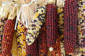 Indian Corn Royalty Free Stock Photo - 246115