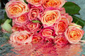 Roses Royalty Free Stock Photography - 2400997
